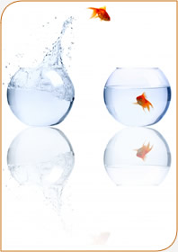 Jumping Goldfish - What Happens in Coaching
