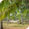 Hammock in Kerala Palm Trees
