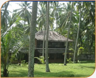 Lush Kerala palm tree setting